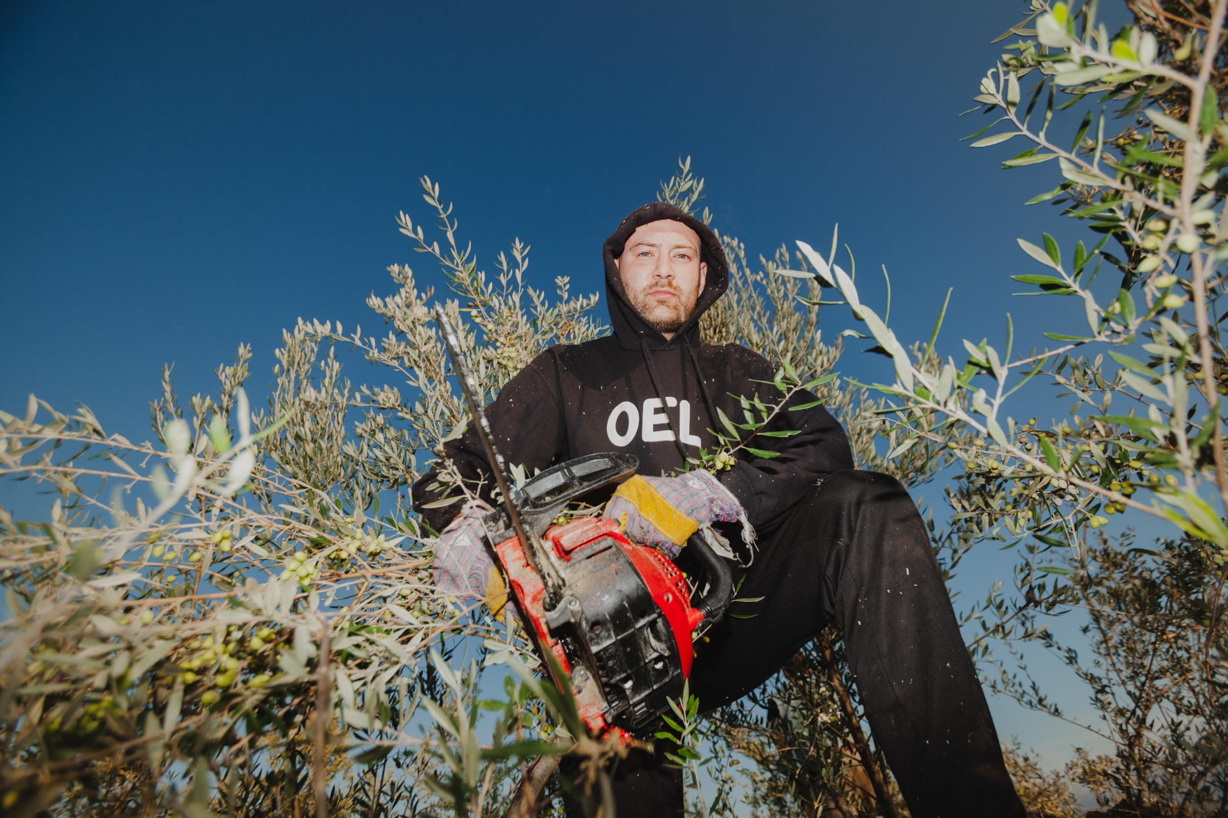 Amadeus working with a chainsaw in the canopy of an olive tree.